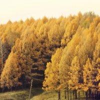 осень 3 :: Арсений Куликов