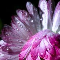 Цветок :: Михаил Нифантов