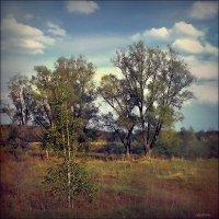 Пейзаж.. :: Алексей Макшаков