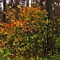 Осень - художник :: Светлана Шестова