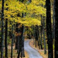 Дорога ведущая в осень.. :: Slava Sh