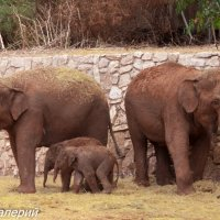 слоники :: Валерий Цингауз