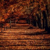 Багровая Осень :: Тамара Филин