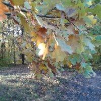 Очаровательная осень и солнечный зайчик... :: Светлана Ященко