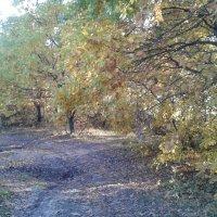 Пастельная осень. :: Светлана Ященко