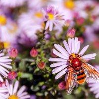 Веер для пчелки... :: Елена Васильева