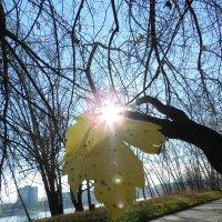 Солнца луч. :: Андрей В.