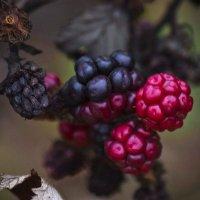 Осени краски! :: Svetlana Sneg