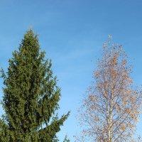 Осень :: Лариса федотова