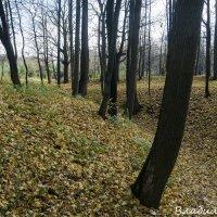 Царицыно :: Владимир Белов