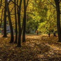 золотая осень в Коломенском :: Виктор Тараканов