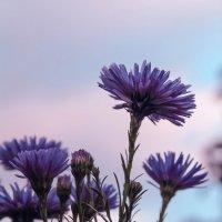 цветы осени :: Любовь Анищенко