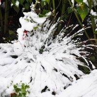 Снежный фонтан :: Светлана