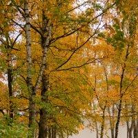 осень :: Диана Матисоне