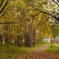лес :: Диана Матисоне