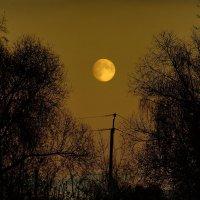 осень,луна,вечер :: Александр Шурпаков