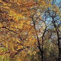 Осень на городской аллее :: Сергей Банков