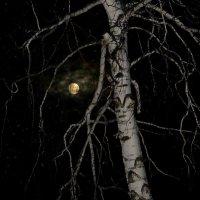 Луна блудница :: Нина северянка