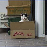 Кот и Мехеев-из серии Кошки очарование мое! :: Shmual Hava Retro