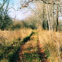 Дорога в осень :: Дмитрий Арсеньев