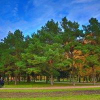 осень в парке :: юрий макаров