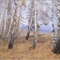 Прощание с осенью :: galina tihonova