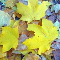 autumn :: Наталья