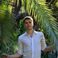 Пальмовые ветви :: Димтрий Ганжа