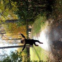 Осень! :: Лилия Масленникова