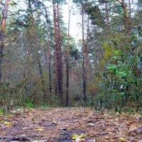 Лес готовится к зиме :: Антон Банков