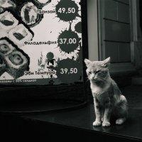 высоки ваши цены :: Ариэль Русаловна
