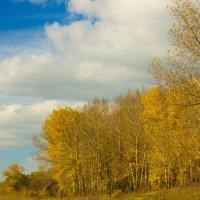 Осенний пейзаж :: Юрий Клишин