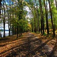 Осенний парк :: Андрей Тихомиров