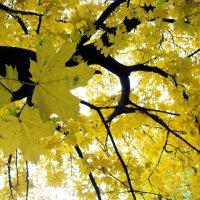 Осень :: Вера Бойко