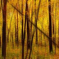 Осенний холст :: Руслан Махмуд-Ахунов