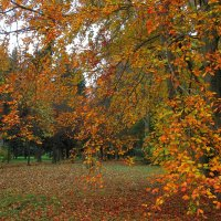 Золотая осень :: Olga Taube