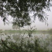 там за туманами :: Елена