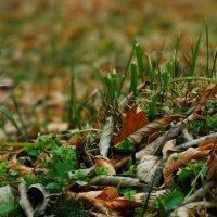 травушка-муравушка :: Лилия Еськина