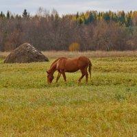 В осеннем поле :: Валерий Симонов