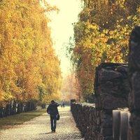 Золотая осень :: Svetlana Shumilova