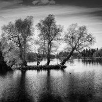 Осень на озере в оттенках серого. :: Vladimir Kraft
