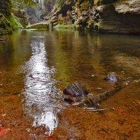 В ущелье реки Kamenice :: Юрий Вайсенблюм