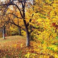 Барви осені :: lena kutsin