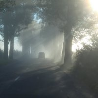 Утро туманное... :: Olga