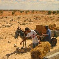 Труженники пустыни :: navalon M