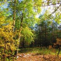 осенний лес :: Marina Timoveewa