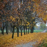 Осенний марафон :: Павел Сущёнок
