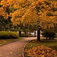 дорога в осень :: Виктория Переплетенко