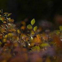 Осенний лучик :: Алена Афанасьева