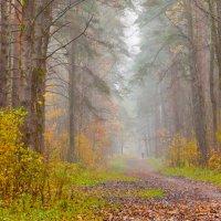 дождь в лесу :: Диана Матисоне